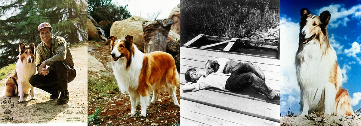 header image Lassie