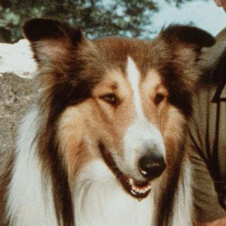 Brand image Lassie