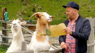 Program image Heidi – Abenteuer in den Bergen