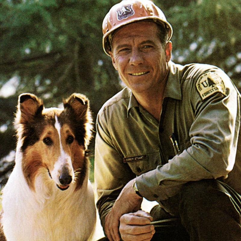 News image Wieder da: Lassie!